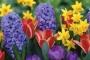 Днес е Цветница – честит празник!